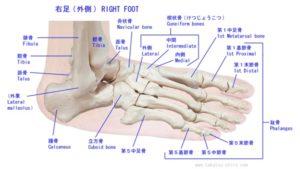 体の基本は「骨」であり、歪みは「足」から始まる!